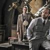 Homossexualidade de Dumbledore será retratada em Os Crimes de Grindelwald