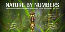 Nature By Numbers - Poster / Capa / Cartaz - Oficial 1