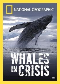 Baleias em Perigo - Poster / Capa / Cartaz - Oficial 1