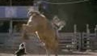 Cowboy Up Trailer