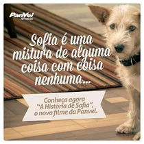 A História de Sofia - Poster / Capa / Cartaz - Oficial 1