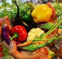 Projeto PANCs - Soberania Alimentar e Biodiversidade Palpável - Poster / Capa / Cartaz - Oficial 1