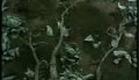 Otesánek - trailer