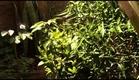 Trailer - Poço Verde: A Terra das Algarobeiras