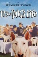 Aventuras de Um Cachorro (It's a Dog's Life)