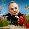[CINEMA] Bill Murray: mito faz 64 anos!