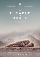O Milagre de Tekir (Le Miracle de Tekir / Miracolul din Tekir )