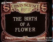 Birth of a Flower - Poster / Capa / Cartaz - Oficial 1