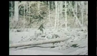 """Bigfoot County"" -  Official Trailer 2012 [HD]"