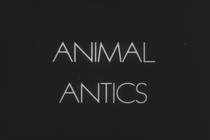 Animal Antics - Poster / Capa / Cartaz - Oficial 1