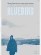 Bluebird (Bluebird)