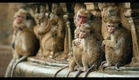 Disneynature's Monkey Kingdom - Official Trailer