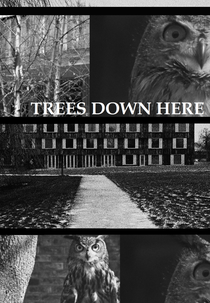 Trees Down Here - Poster / Capa / Cartaz - Oficial 1
