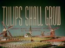 Tulips Shall Grow - Poster / Capa / Cartaz - Oficial 1