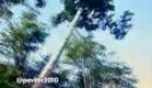 Chamada de estreia | Amazônia # Record (2011)
