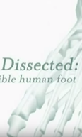 Dissecado: O Incrível Pé Humano ( Dissected: The Incredible Human Foot)