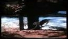 Homeward Bound: The Incredible Journey (1993) Trailer