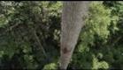 Human Planet - Trailer - Legendado