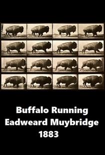 Buffalo Running - Poster / Capa / Cartaz - Oficial 1