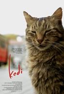 Gatos (Kedi)