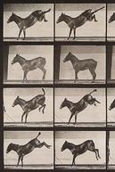 Mule Kicking (Mule Kicking)