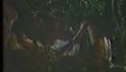 Peque Gallaga's Virgin Forest 1985