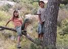 Des Enfants dans les Arbres (Des Enfants dans les Arbres)