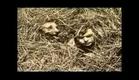 Arbuckle/Keaton-1919 Silent-The Hayseed Pt1/3