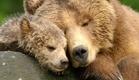 Bears - Official Trailer (HD) Disney Documentary