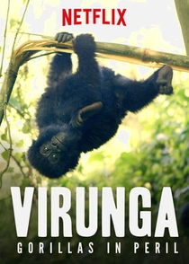 Virunga: Gorillas in Peril - Poster / Capa / Cartaz - Oficial 1