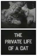 The Private Life of a Cat (The Private Life of a Cat)