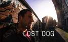 Lost Dog (Lost Dog)