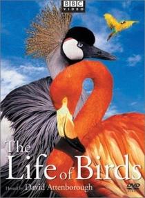 BBC - A Vida dos Pássaros - Poster / Capa / Cartaz - Oficial 2