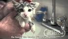Gato adotado (Legendado)