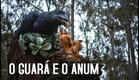 O Guará e o Anum | Trailer (2019)