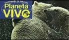 Planeta Vivo - A Fronteira Ártica