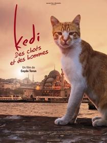 Gatos - Poster / Capa / Cartaz - Oficial 5