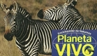 Planeta Vivo - O Grande Karoo