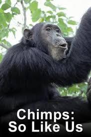 Chimpanzés: Iguais a Nós - Poster / Capa / Cartaz - Oficial 1
