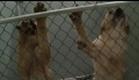 One Nation Under Dog: Trailer