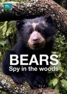 Bears: Spy in the woods (Bears: Spy in the woods)