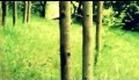 O Maniaco da Floresta [Trailer Oficial]