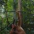 A Última Floresta, dirigido por Luiz Bolognesi, estreia no Brasil no É Tudo Verdade