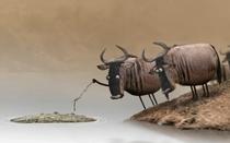 Wildebeest - Poster / Capa / Cartaz - Oficial 1