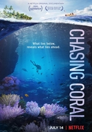 Em Busca dos Corais