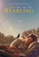 Um Ninho Para Dois (The Starling)