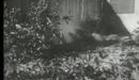The Killer Shrews (1959) - Trailer