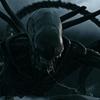 Terror, ação e sci-fi: Alien - Covenant entra para o catálogo do Telecine Play!