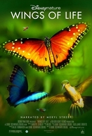 Wings of Life (Wings of Life)