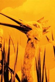Les grenouilles qui demandent un roi - Poster / Capa / Cartaz - Oficial 1